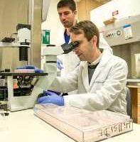 Researchers Microscope