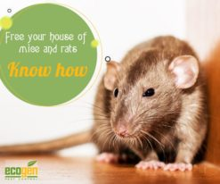 free your house from the menace of mice and rats