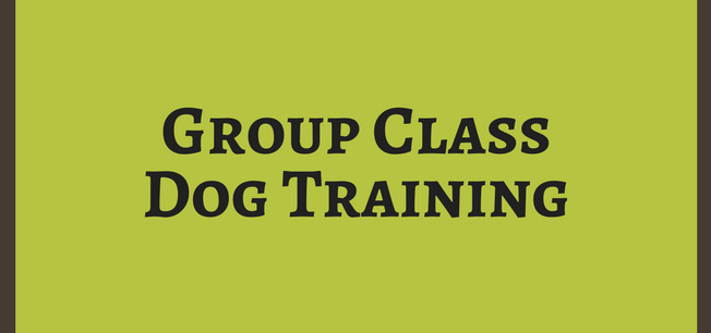 Group Class Dog Training
