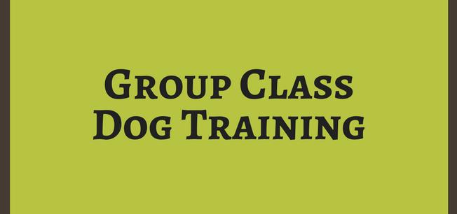 Group Class Dog Training