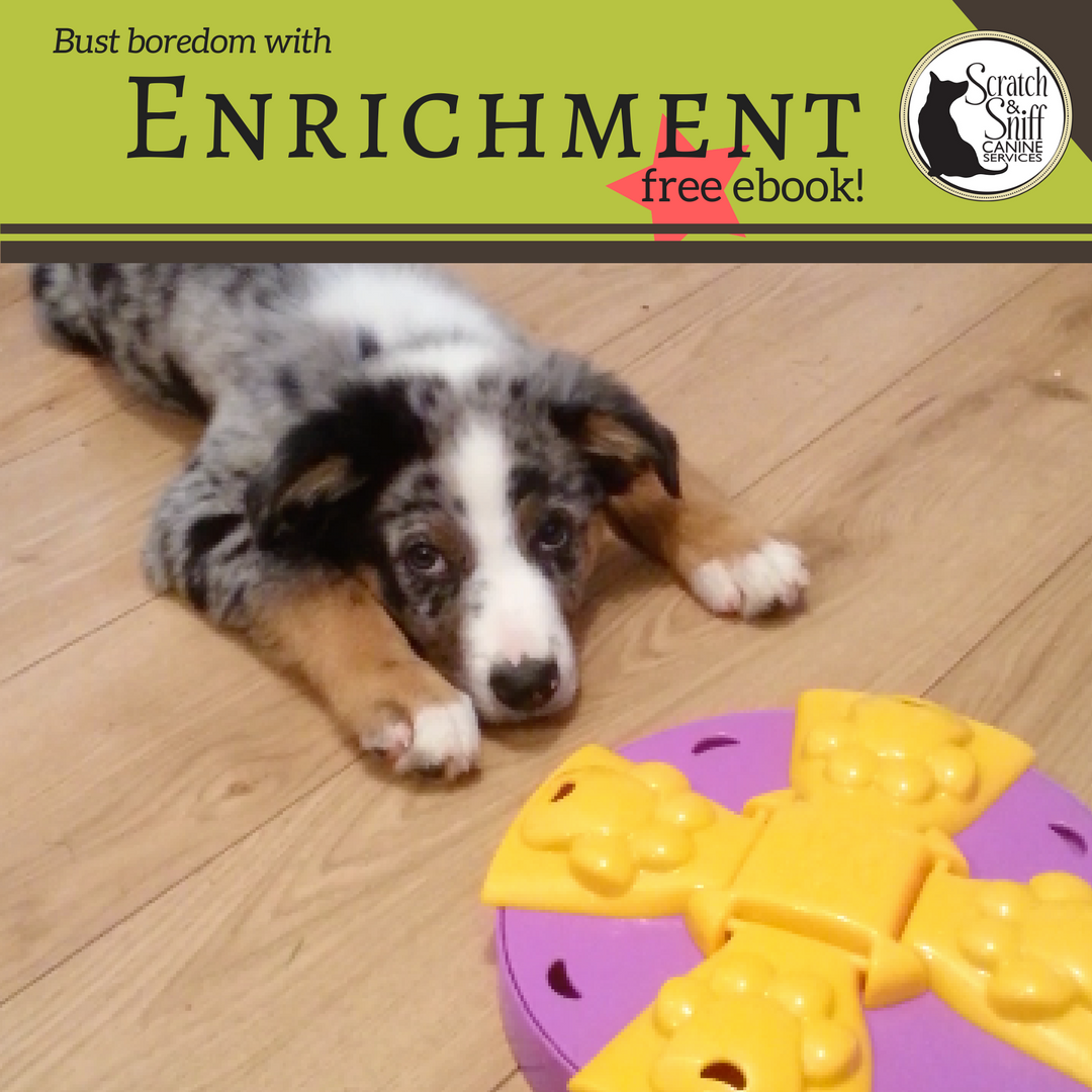 dog enrichment toy chewing puppy barking destructive training