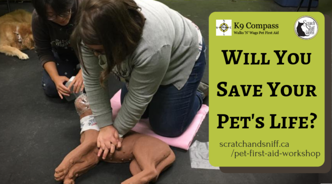 Pet First Aid Workshops