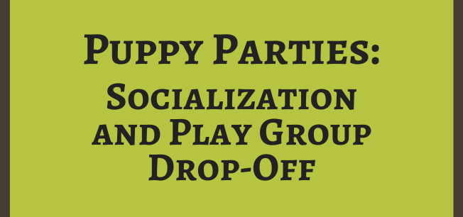 Puppy Party: Socialization & Play Group Drop-off