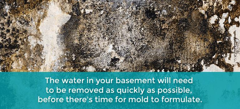 inspect basement for mold