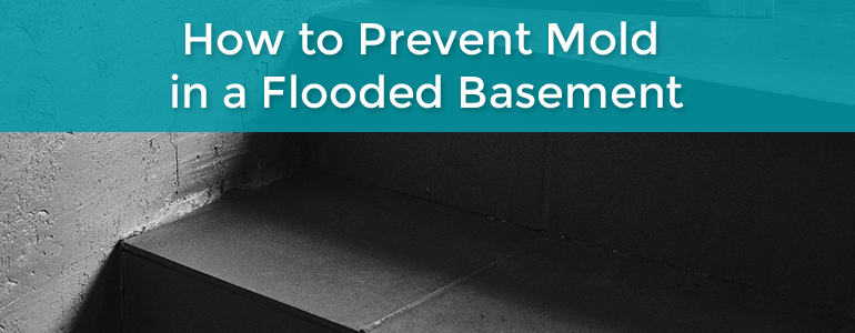 how to prevent mold in basement