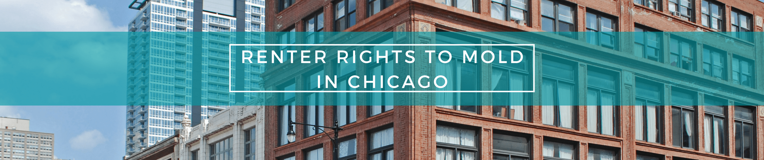 Renter's Rights to Mold in chicago