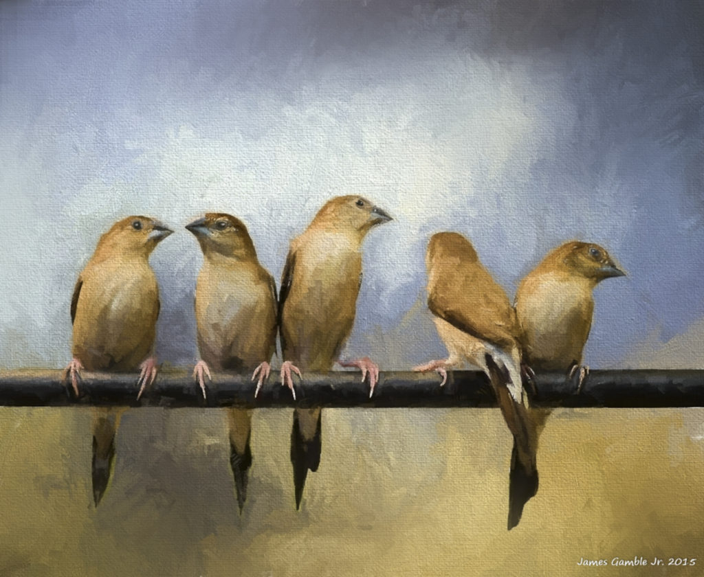 Birds on a Perch
