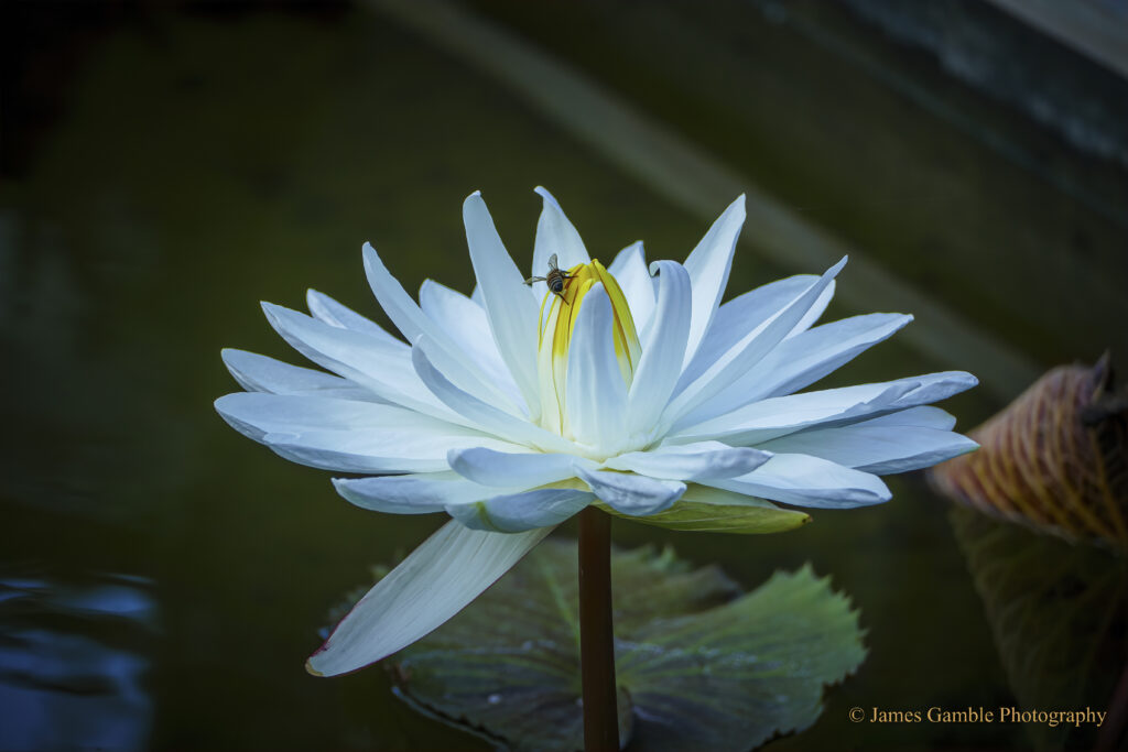 Nelson-Water-Garden-2019-1140177-studio