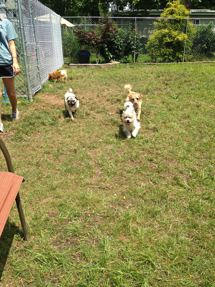 Little dogs at play