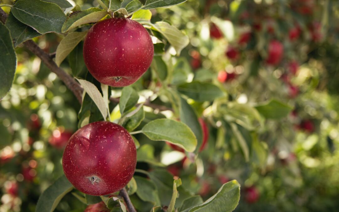 Elementary and Middle School Students Visit Apple Orchards