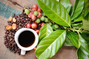 Brazilian coffee - Minas Espresso Inc