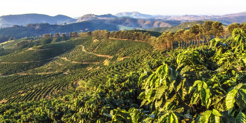 What Makes Brazilian Coffee So Desirable? | Minas Espresso Inc.
