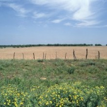 Where to learn about land sales in your market | Advice for Consumers | Texas Association of REALTORS