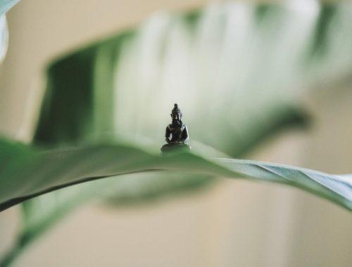 introvert-extrovert-buddha-presence