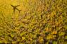La IATA lanza nueva herramienta para ayudar a las aerolíneas a cumplir con sus compromisos climáticos