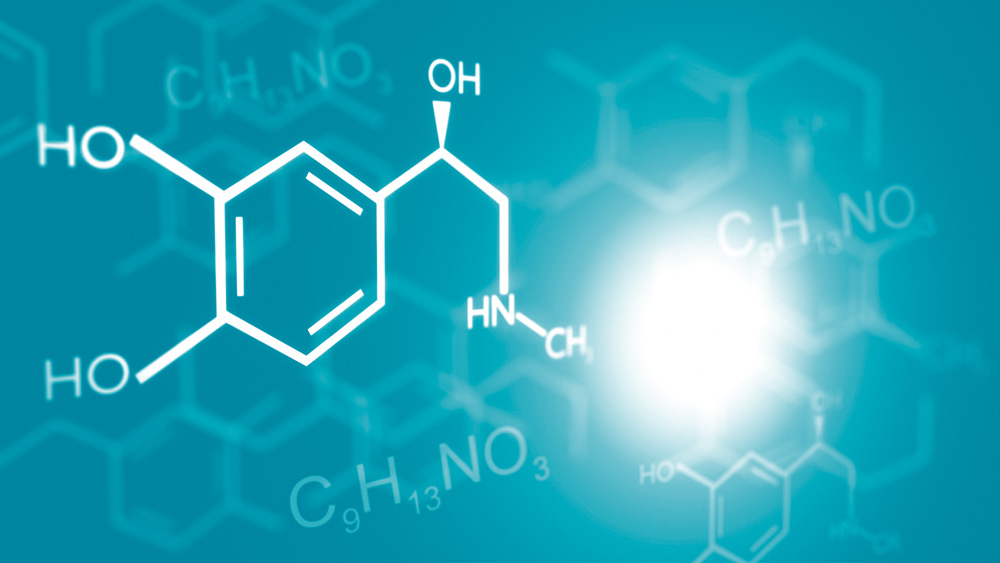 The Role of Alkaloids in Drug Addiction