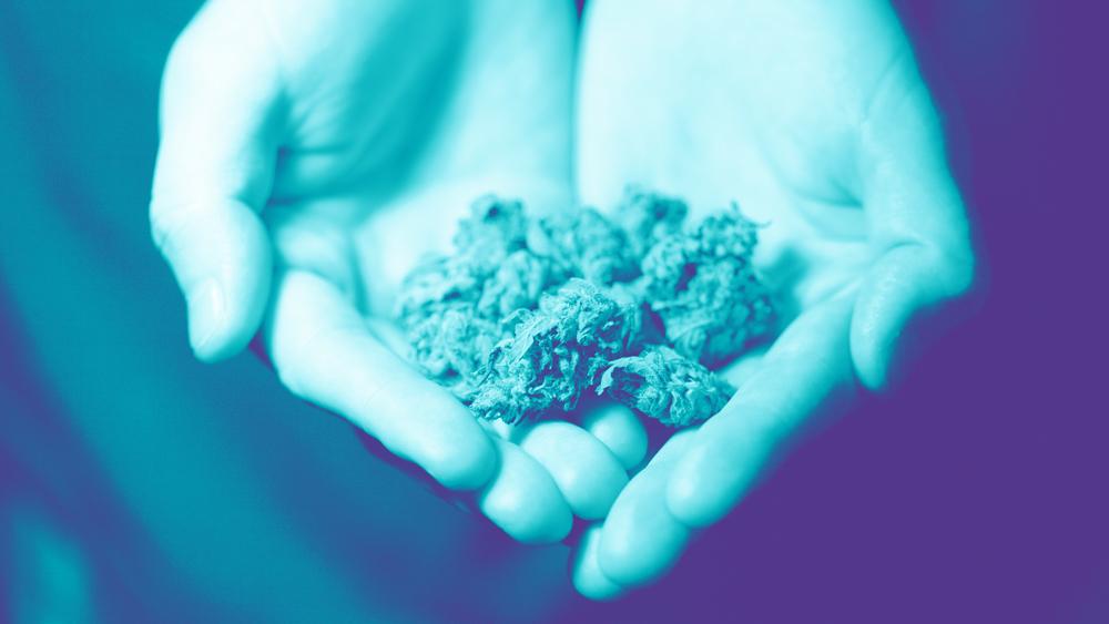 Addiction and Marijuana Use