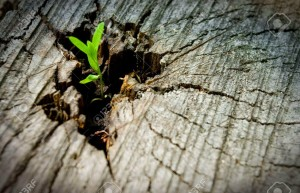 6180698-young-sprout-on-an-old-tree-new-tree-stump
