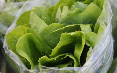 TBT Recipe: Butter Lettuce Salad with Tarragon and Citrus-Honey Vinaigrette from Eric Ripert