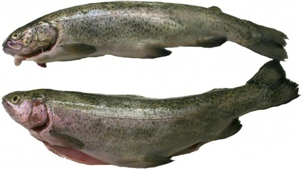 Naverre-Style Trout