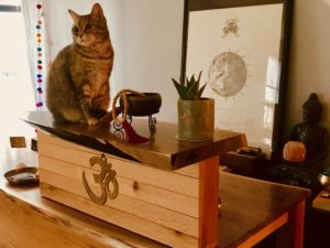 Our kitty cat offers her blessing to our reception desk, hand-crafted by Vine & Branch, right here on 146th Street
