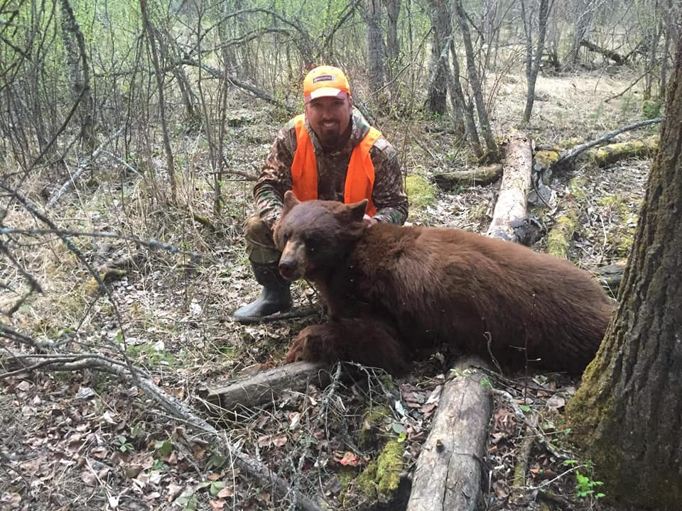 Our trophy black bear hunts provide a great opportunity to take a colored-phase bear!