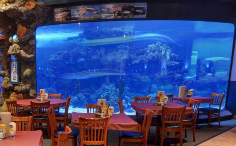 Dining with the Sharks