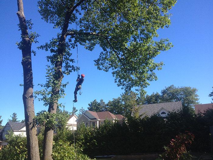 Arbtech-Tree-Care-Ryan-Jennett
