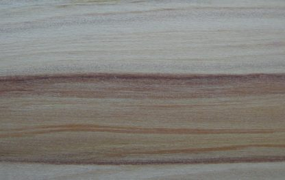 Araucaria cunninghamii
