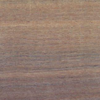 Acacia cambagei