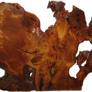 Kauri Ancien daté au carbone d'environ 45 000 ans