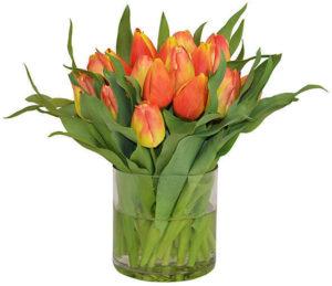 OKL tulips