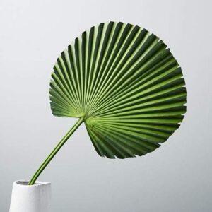 WE fan palm