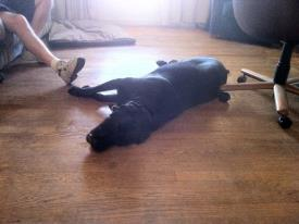 dog laying down on floor