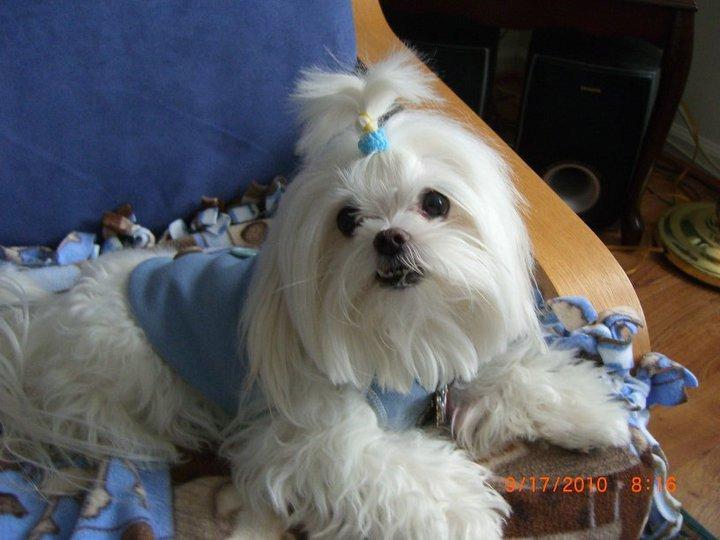 small dog dressed