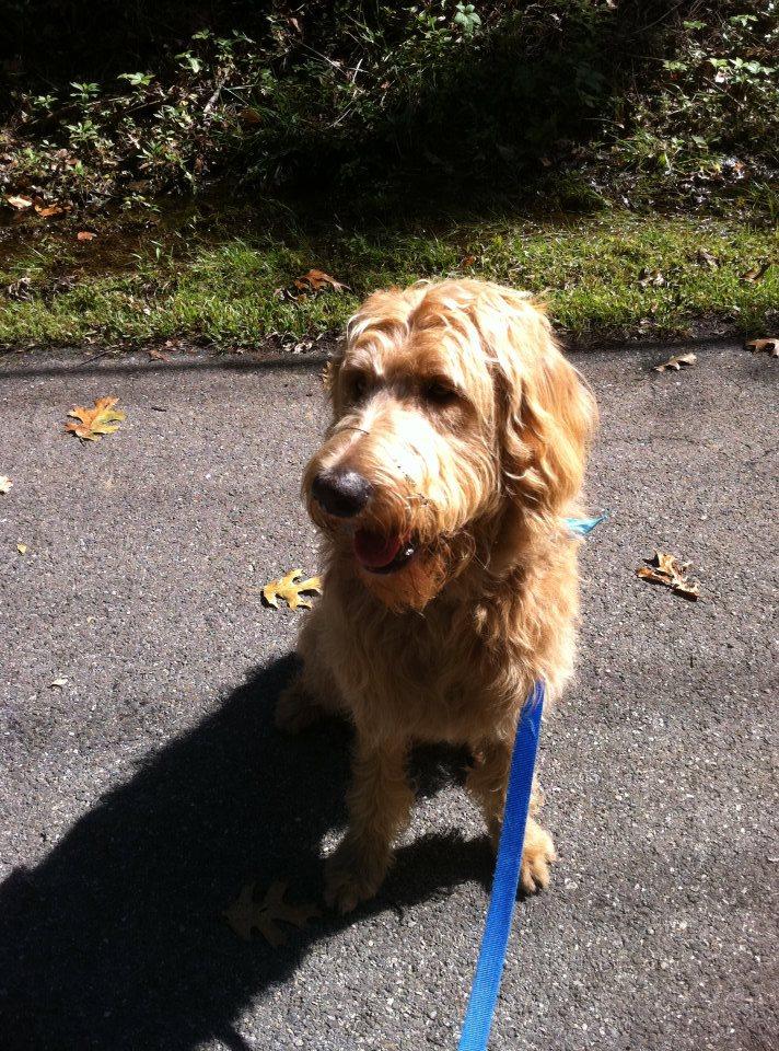 dog sitting during a walk