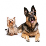 pet sitting services Jens Gentle Pet Sitters