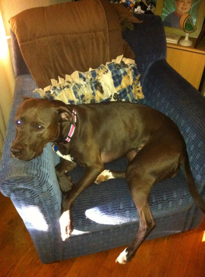 dog resting on chair