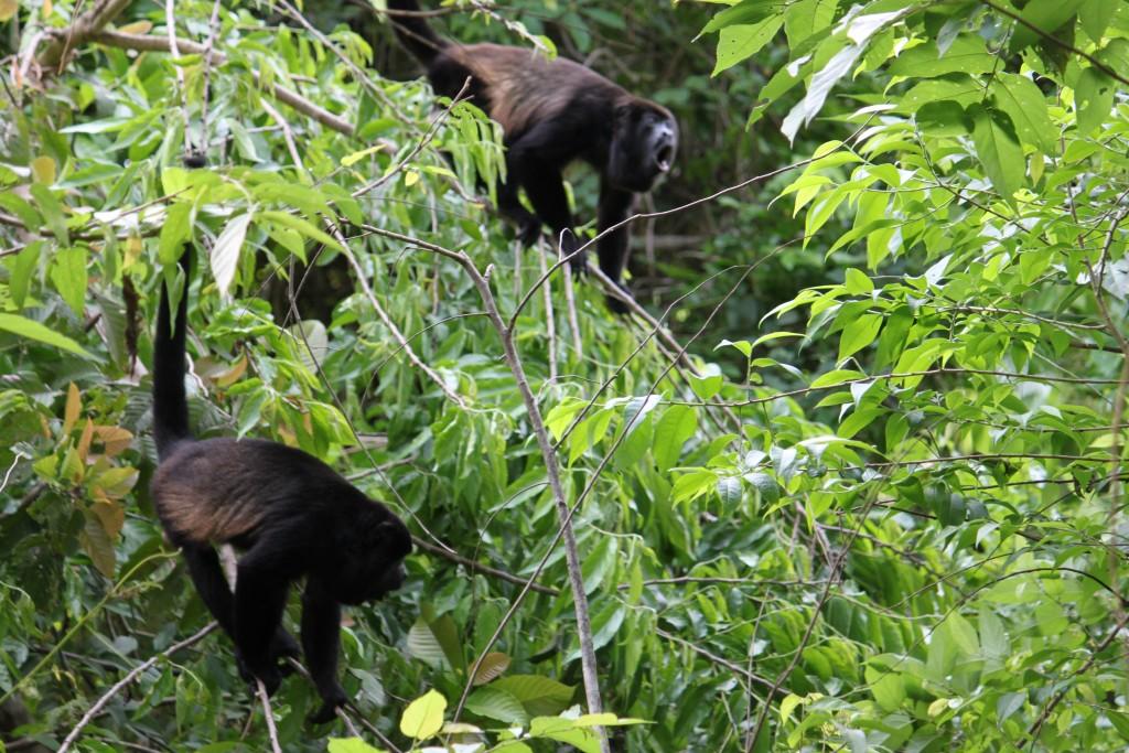 costa rica travel blog ladyhattan jungle adventure
