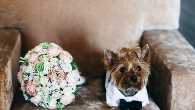 Wedding-bouquet-of-flowers.-Festive-dog.-cm