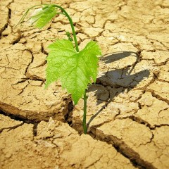¿Somos resilientes? –Forjadores?