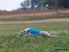 Ollie Coursing