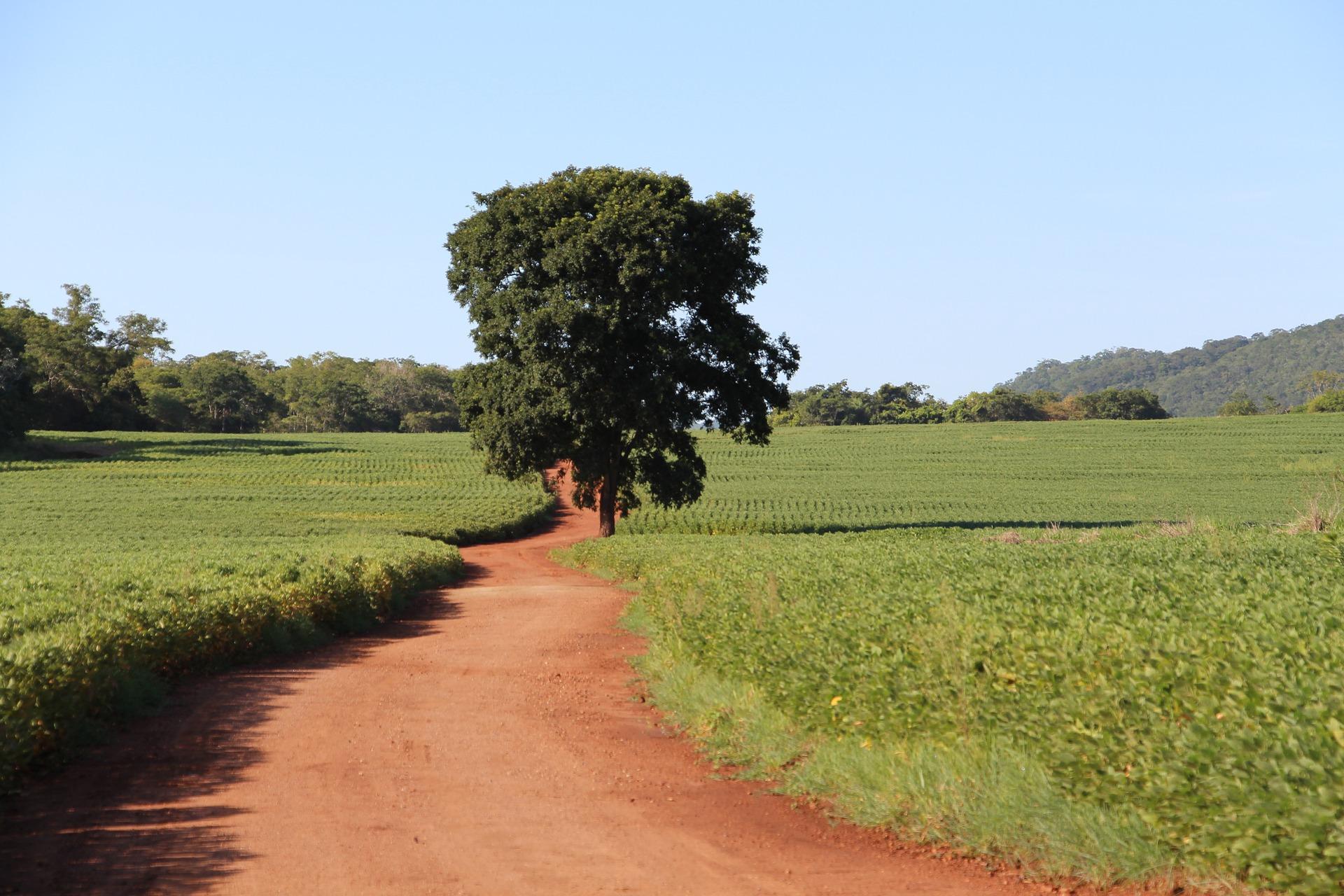 amazzonia soia