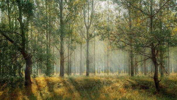 la melodia degli alberi