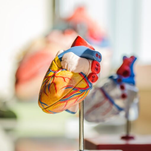 donazione degli organi