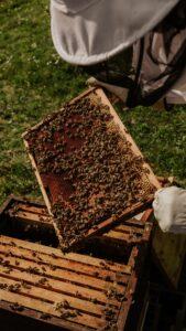 L'importanza delle api per il Pianeta