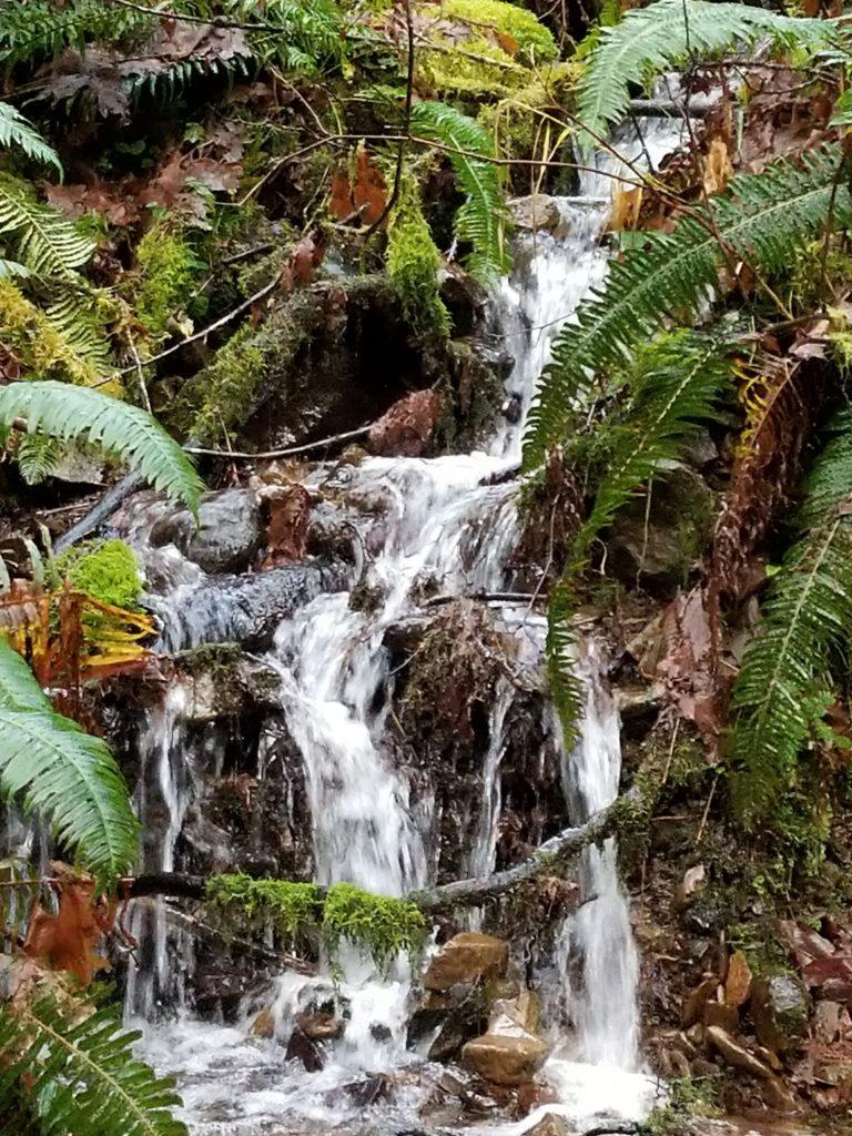 Sweet Creek, OR