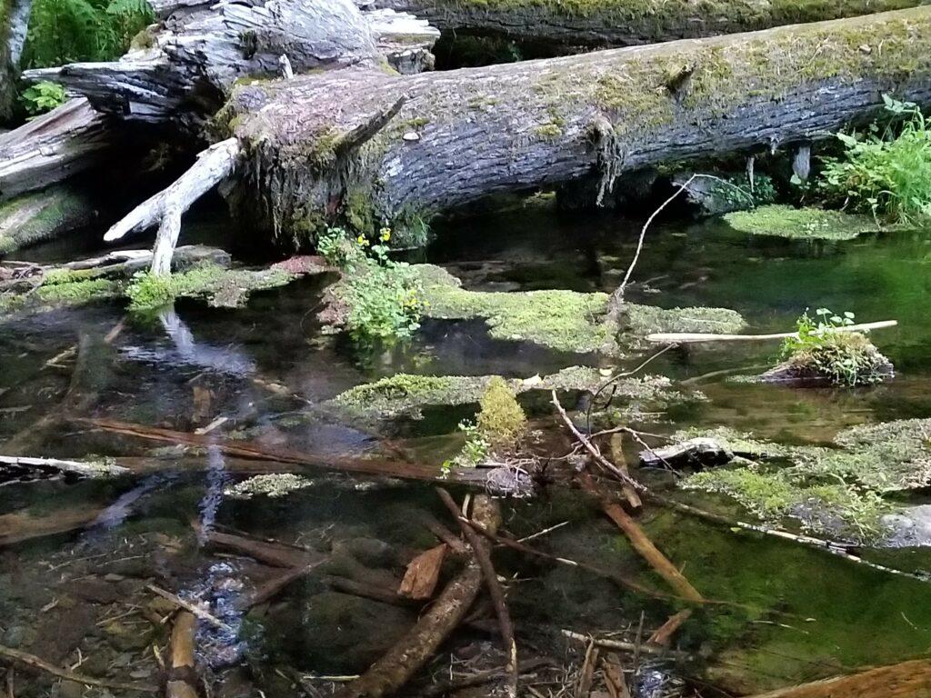 Dead Wood Pond
