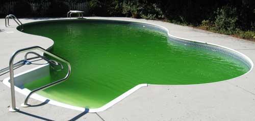 Green pool