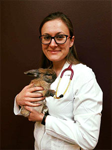 Dr. Lucy Haile holding rabbit at Wellesley Exotic Pet Vets